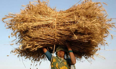 Indian-farmer