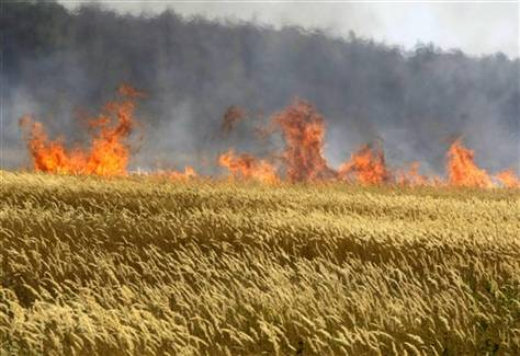 Russia wheat woes