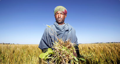 Africa_agriculture