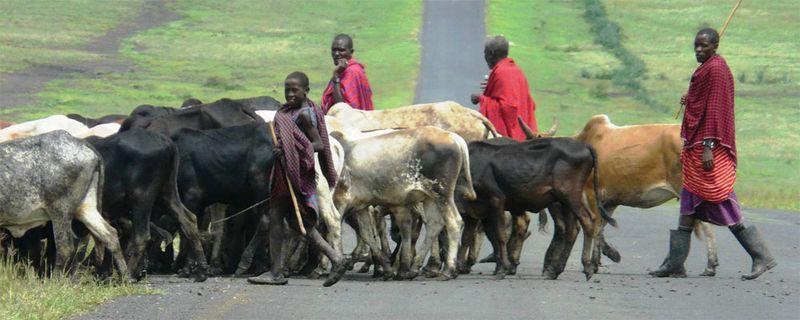 Ag-boys-herding-africa