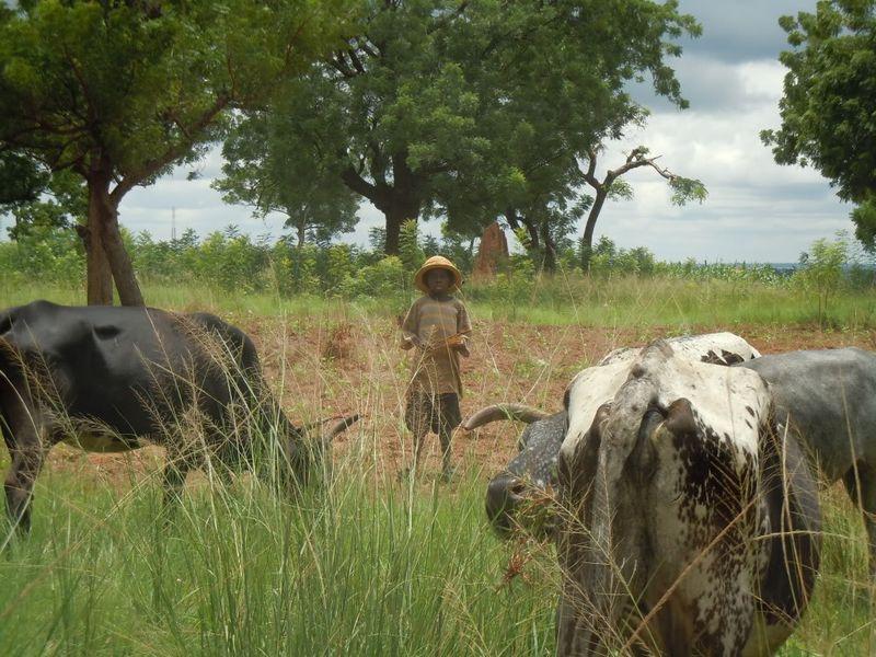 Ghana4-Tamale015