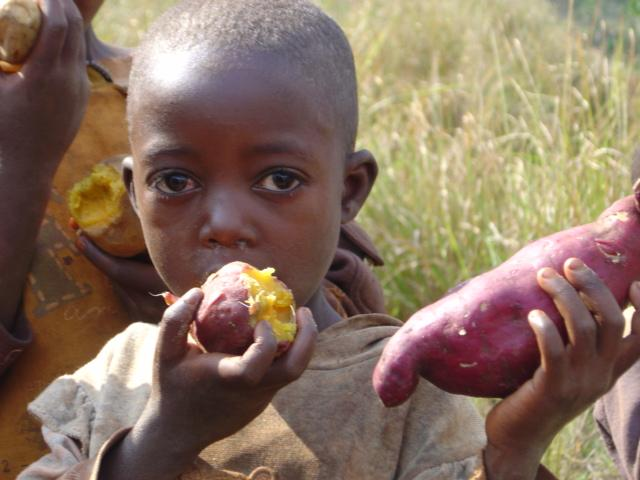 Child Sweet Potato
