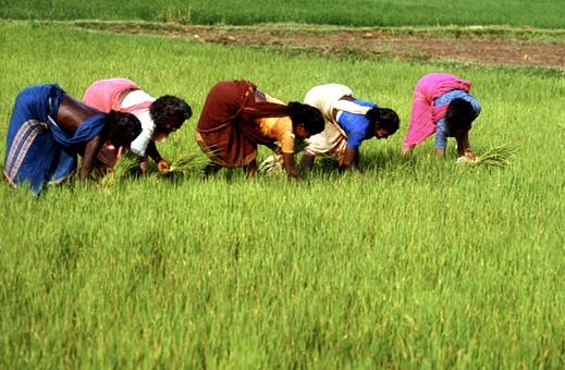 Indian-agriculture