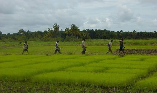 Agriculture-workers-in-africa-return-home