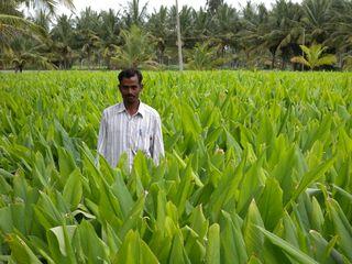 Driptech farmer