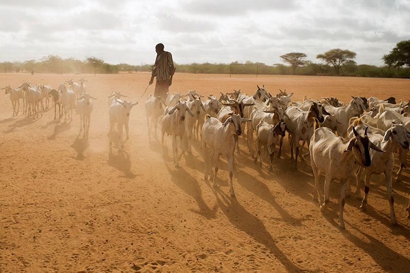 Livestockkenya